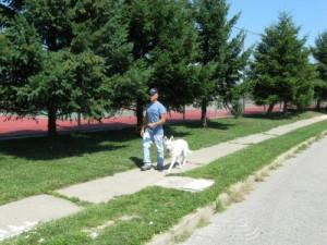 advanced dog training off-leash